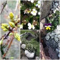 Ligita Kartanienė Pavasaris tikrai